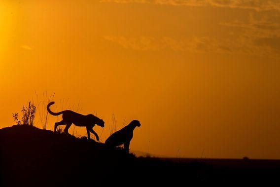 Silhouette Cheetah van Pradyuman Samant