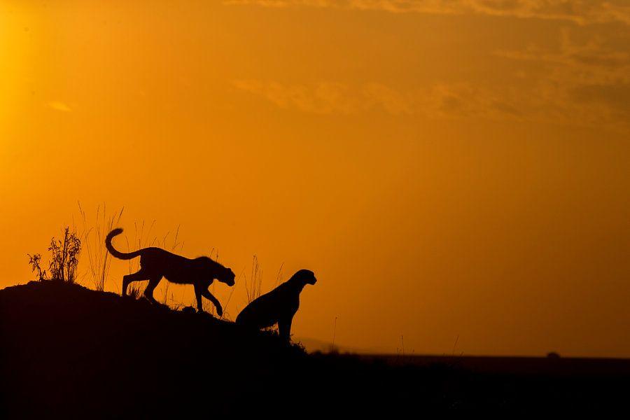 Silhouette Cheetah