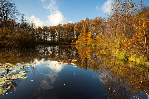 Herfst reflectie van