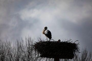 Ooievaar op het Nest van Petro Luft