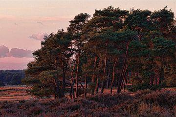 Nationaal Park de Hoge Veluwe van Ed Vroom