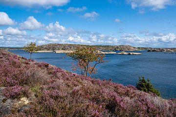 Blick auf die Insel Dyrön in Schweden von Rico Ködder