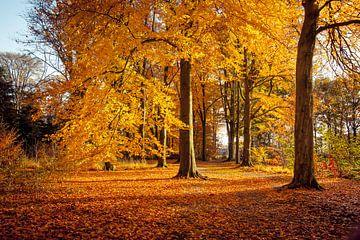 Buchen in schönen Herbstfarben von Marcel Bakker