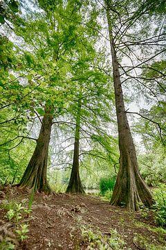 Bäume im Tilburgse Wandelbos