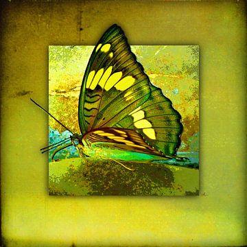 Butterfly | Butterfly van Dirk H. Wendt