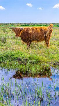 Schotse Hooglander aan het water (verticaal) van Jessica Lokker