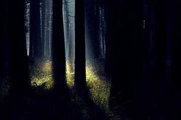 Zonnestralen in het donkere bos von J.A. van den Ende