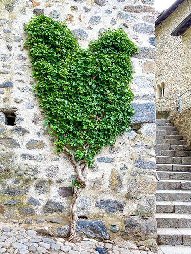Een hart voor klimop