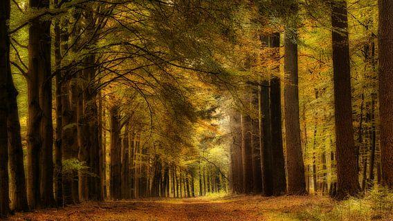 Herfst bos van Bram van Broekhoven