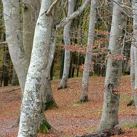 Forêt de novembre sur Ostsee Bilder