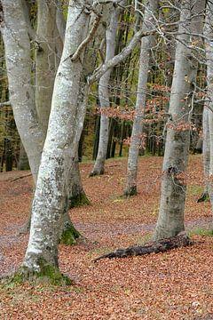 November bos van Ostsee Bilder