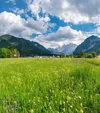 Weiland vol met alpenbloemen, Valbruna, Udine, Italië van