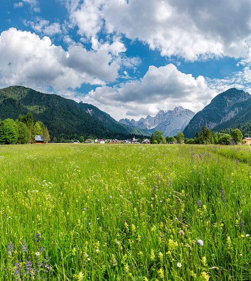 Weiland vol met alpenbloemen, Valbruna, Udine, Italië