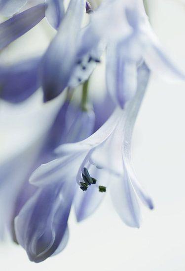Delfts blauw van Marlies Prieckaerts