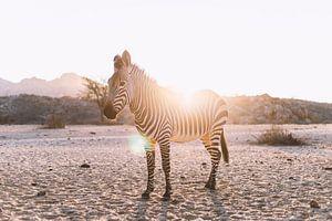 Zebra im Gegenlicht in Namibia