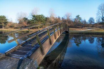 Winterdag in de Amsterdamse Waterleidingduinen van Peter Bartelings Photography
