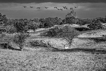 Landschap met boom van Marcel van Berkel