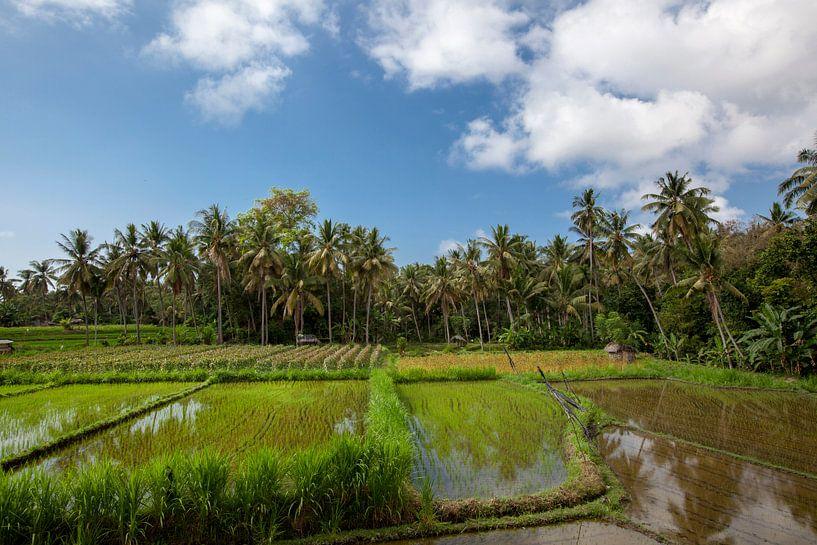de zon komt op boven de groene velden van de rijstvelden van Tegalalang in het hart van Bali, Indone van Tjeerd Kruse