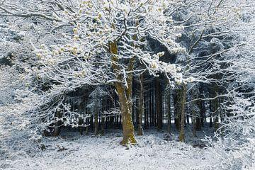 Forest gate van Erik de Jong