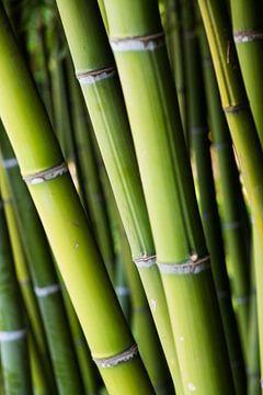 Bamboe van