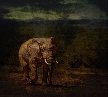 Lone bull von Aya de Ruiter