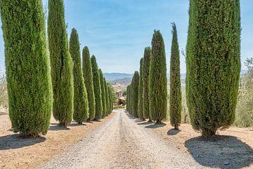 Cypress sur eric van der eijk
