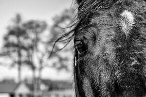 Paard van Ruud van Ravenswaaij