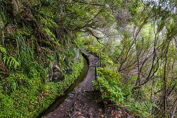 Levada auf Madeira von Friedhelm Peters