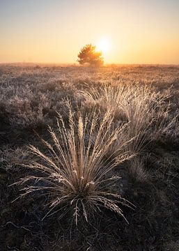 Nebliger Sonnenaufgang auf der Veluwe mit reifem Frost von Rick Kloekke