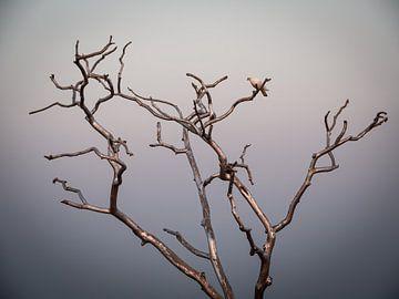 Friedensbaum von Rik Pijnenburg