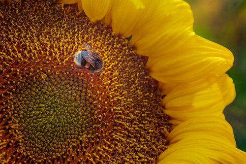 Zonnige bloem