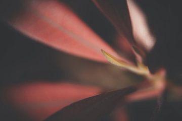 Macro van een rode bloem von Kees van der Rest