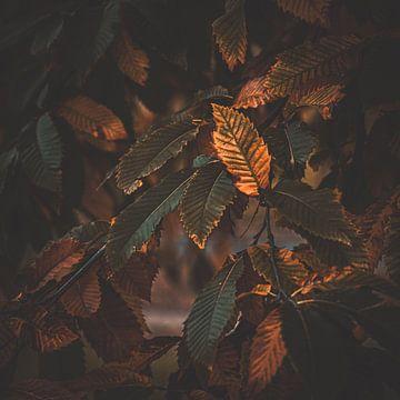 Herbstliche Schwingungen (Herbstgefühl) von Nicky Kapel