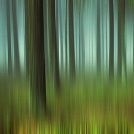 Forêt mystérieuse sur Marion Tenbergen