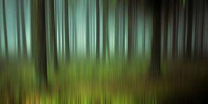 Geheimzinnig bos van