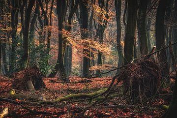 Mystiek oer bos op een vroege ochtend van Fotografiecor .nl
