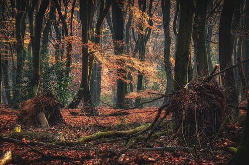 Mystiek oer bos op een vroege ochtend