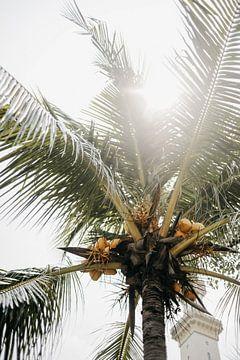 Palmboom van Marianne Bal