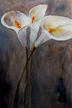 Calla - Drei Blüten von Christine Nöhmeier
