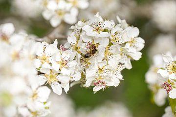 Mooie bloem met insect van Marieke Vanhulle