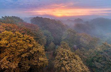 Kaapse bossen in de herfst van