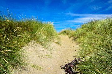 Dune Transition in Otago, Neuseeland von Rietje Bulthuis