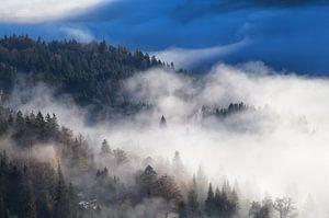 Deep into the fog