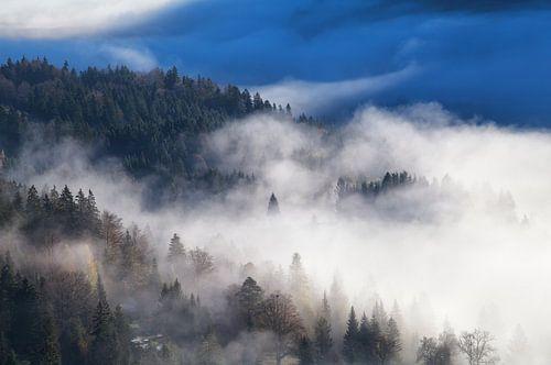 Deep into the fog von Olha Rohulya
