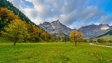Esdoorn in Karwendel van Denis Feiner