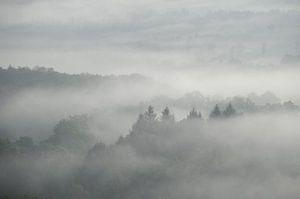 Nebliger Wald von Lies Zijlstra
