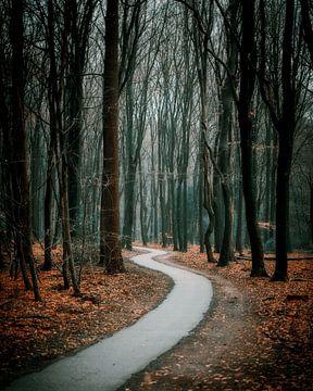Verschlungene Pfade im Speulderwald von Björn van den Berg