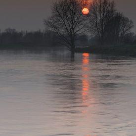 Orange van Eric van Schaijk