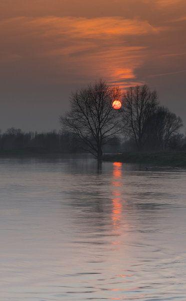 Orange von Eric van Schaijk