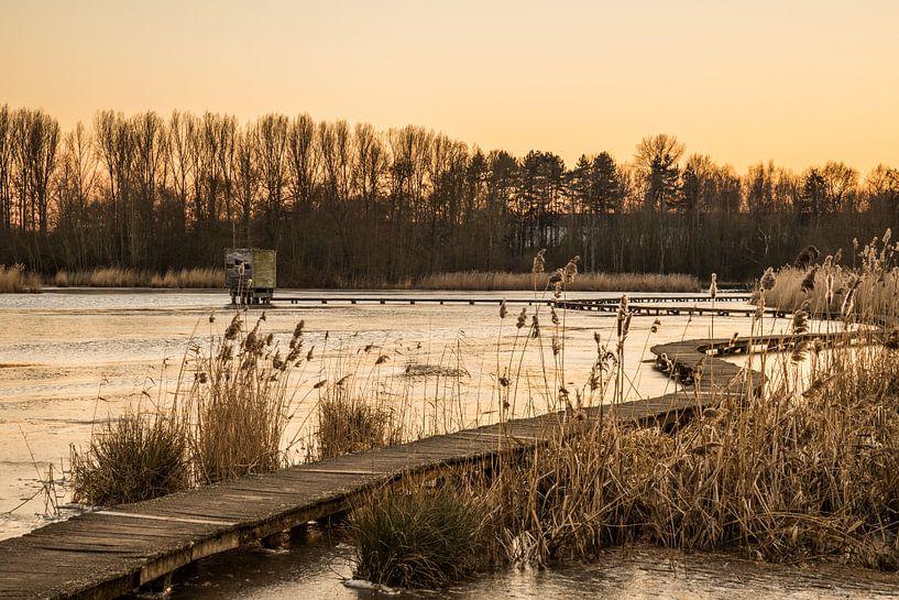 """golden hour at the park """"Het Vinne"""" van Koen Ceusters"""